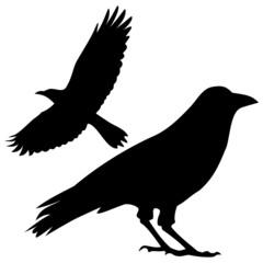 Silhouette of the crow - illustration