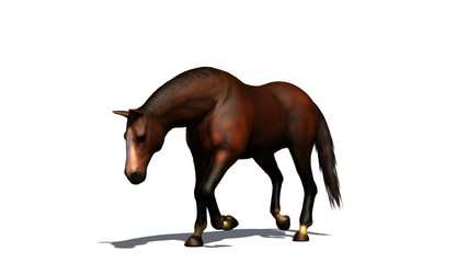 brown horse walks isolated on white background