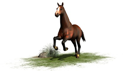 brown horse runs isolated on white background