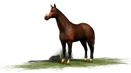 brown horse  isolated on white background