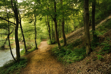 Forest road and flowing stream