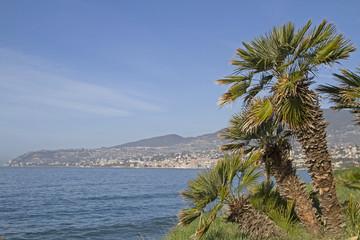 Palmenpracht an der Riviera