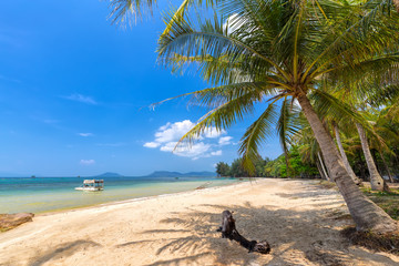 Coconut tree on the sea Phu Quoc, Vietnam