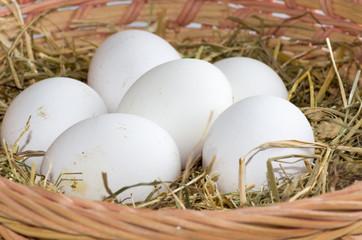 Œufs blancs bio