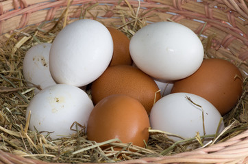 Panier d'œufs bio