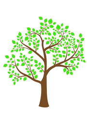 the image of a tree with green foliage