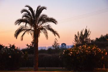 Силуэт пальмы на фоне неба на закате