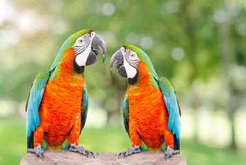 Two parrot standing on dry tree in forest