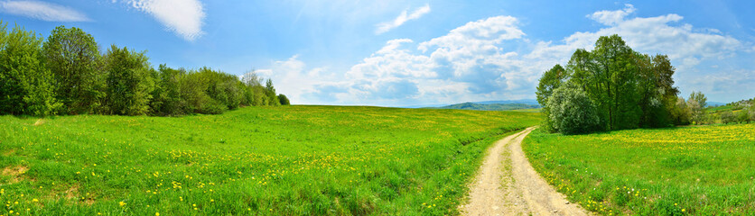 Country road among green meadows with dandelions