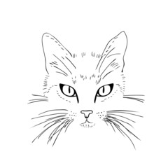 Cat  face. Black and white sketch.
