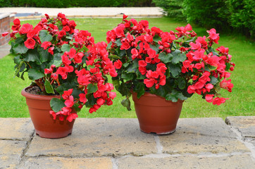 Colorful planters on the patio, betulia
