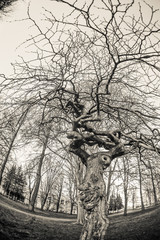 The branches of a tree. Black and white photography.