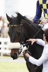 Cavalli galoppo