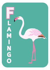 F for flamingo alphabet cartoon animal for children