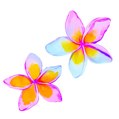 plumeria / frangipani flowers in watercolor