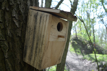 Wooden bird nesting-box on a tree stem
