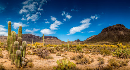 In de dag Droogte Arizona Desert Ladscape
