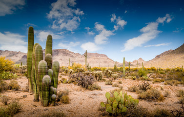 Wall Murals Drought Arizona Desert Ladscape