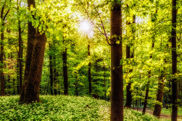 Fresh green Spring Forest in Franconia, Germany