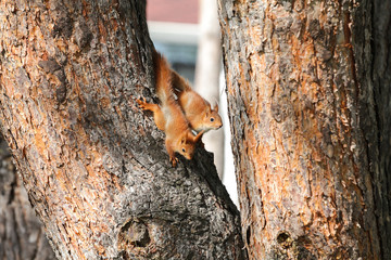 little baby squirrel playing on the tree with brother