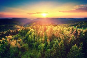 Malerischer Sonnenuntergang über dem Wald