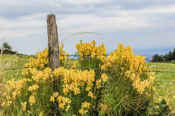 Fleurs sauvages dans le parc du Pilat