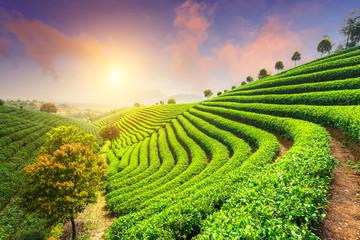 Tea Plantations under sky Wall mural