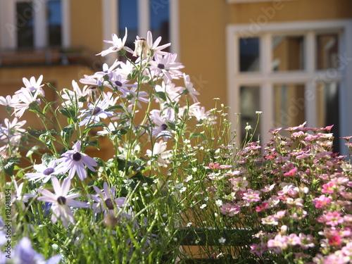 bl hende balkonpflanzen fotos de archivo e im genes On blühende balkonpflanzen
