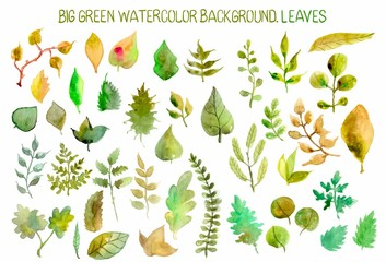 Watercolor leaves collection