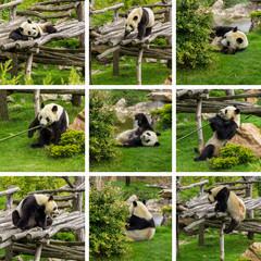 composition pandas