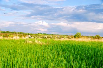 Ukrainian rural landscape