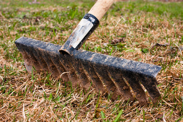 removal of the old grass with rake