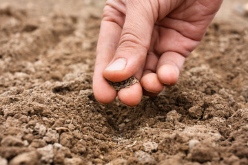 closeup of hand planting seeds in soil