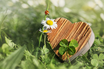 wooden heart, daisies and ladybird