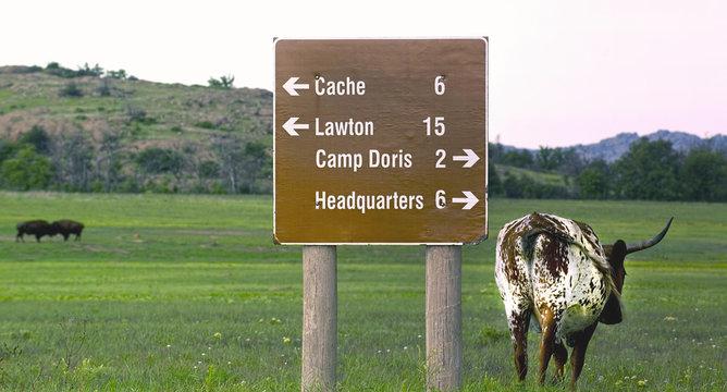Oklahoma Longhorn.