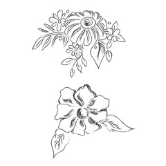 Sketch, flowers, hand drawing, vector, illustration