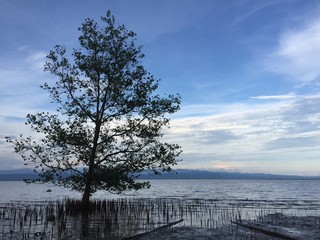 Mangrove forest in Trat