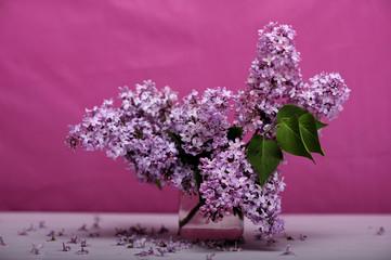 flower, fresh, fruit, healht, healthy, sambucus, season,