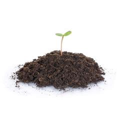 Jungpflanze im Wachstum