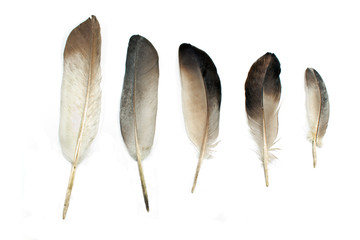 Feathers isolated on white Wall mural