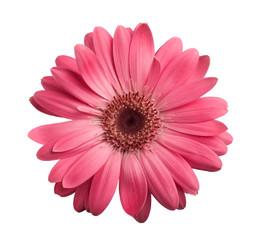 Photo sur cadre textile Gerbera Pink gerbera