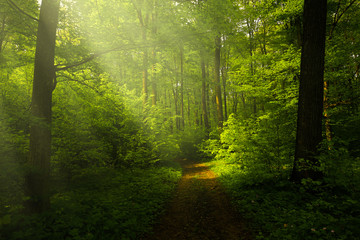 Foto op Canvas Bos Beautiful rays in the spring forest