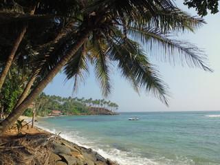 coconut palm trees on the ocean beach