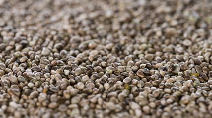 Hemp Seed background