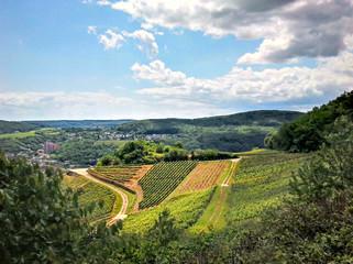 Blick auf Weinreben am Rhein