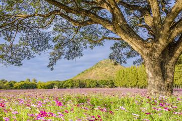 Big tree in pink field