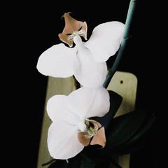 Orchid realistic vector illustration flower spa symbol