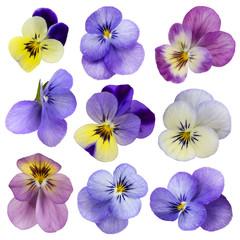 Fotobehang Pansies Viola flowers