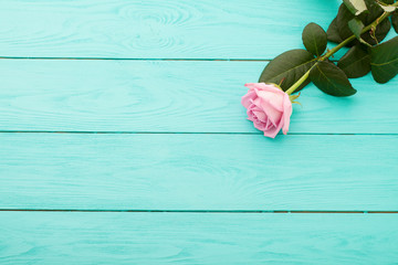 Pink rose on blue wooden background