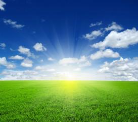 Fototapete -  field and sun